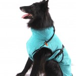 bathrobe fot your dog at pet styling cecile