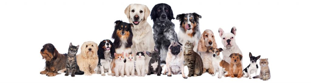 hond chip registratie eindhoven veldhoven